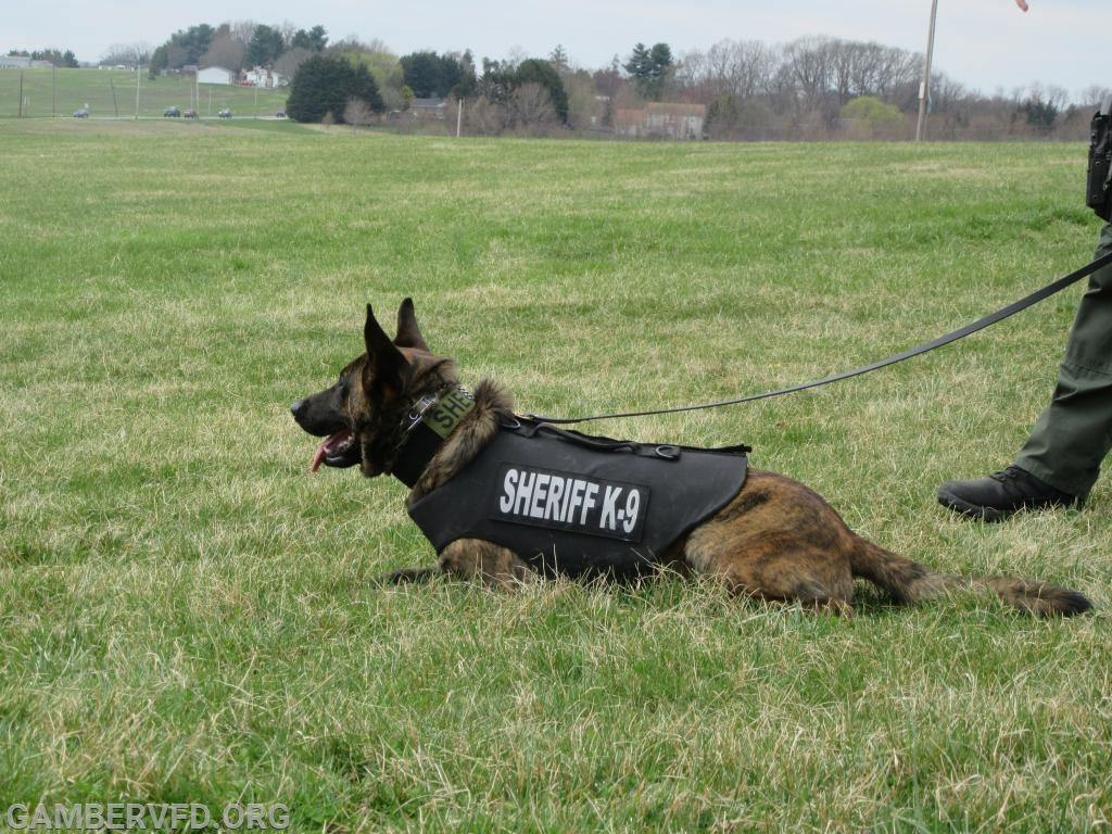 Carroll County Sheriff's K-9 is named Bali and is a Dutch shepherd from Hungary.